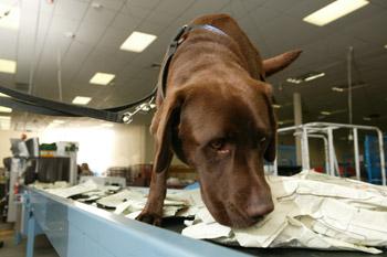drug detector dogs