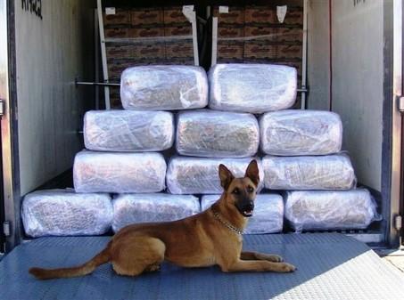 perros detectores de drogas