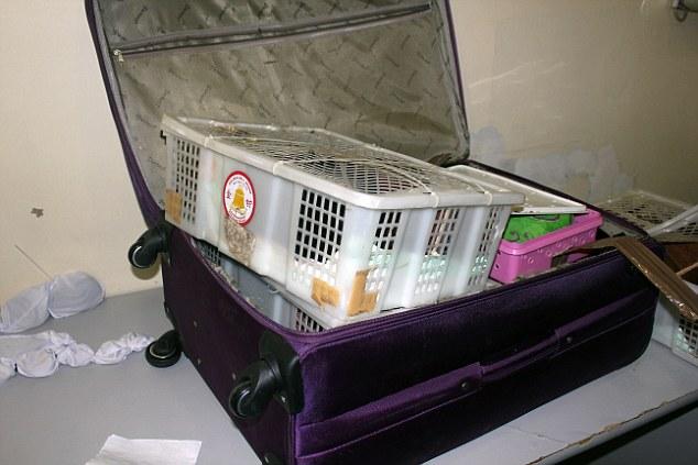 perros biodetectores