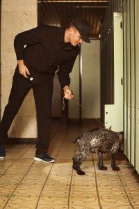 alquiler de perros detectores de dinero